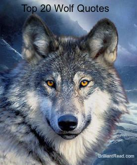 Wolf Quotes About wolf