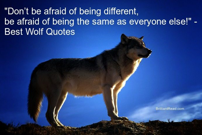 Wolf quotes and proverbs